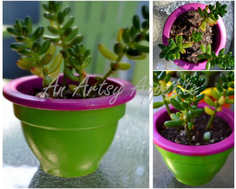 DIY Painted Planters : Summer Color Blocking