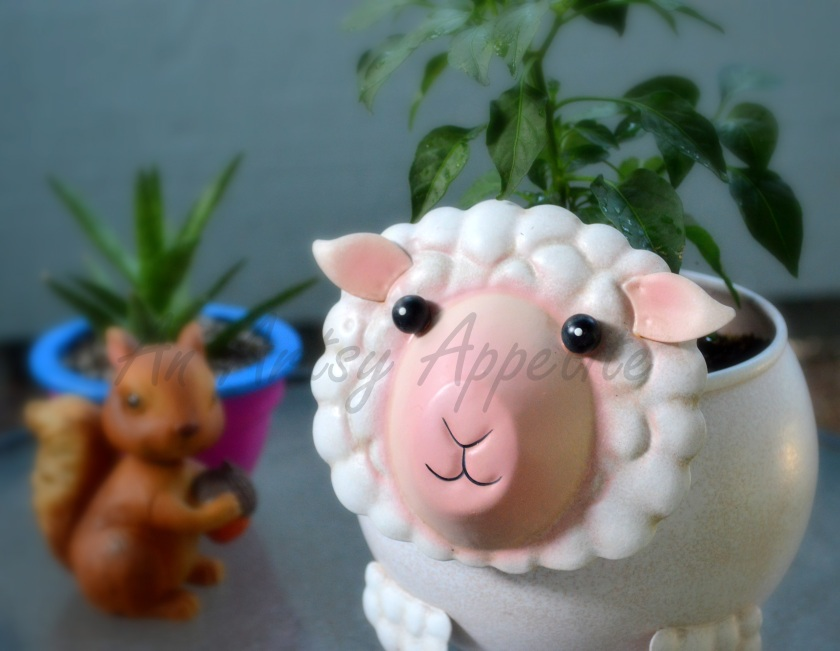 Sheep Planter and Growing Chilli Peppers