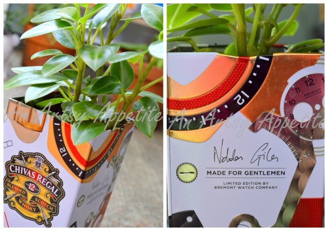 DIY Planter ~ Reuse and Recycle