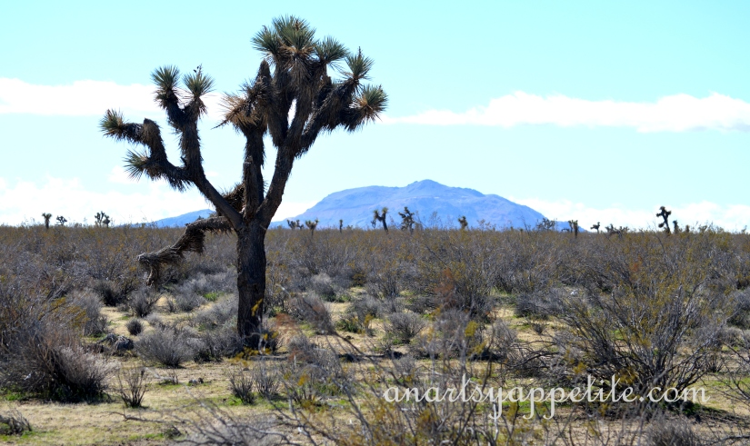 Road Trip to Death Valley, CA Travel photography, Mojave, CA