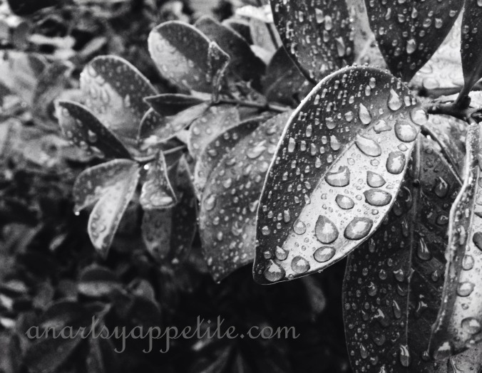 leaf-black-and-white nature in the rain photography