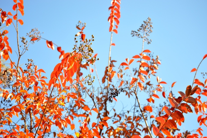 Fall afternoon photography, Fall in California photo, fall photography, nikon photography