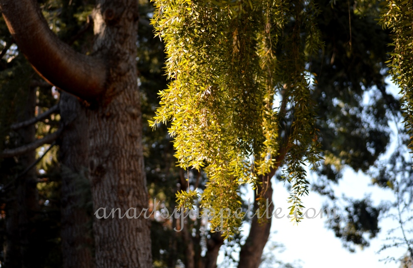Fall morning photography, Fall in California photo, fall photography, nikon photography